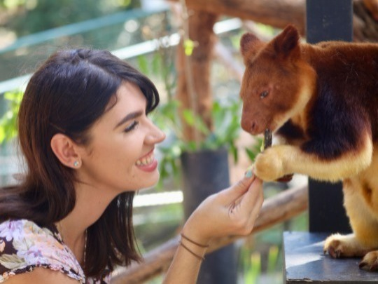 This 20-minute experience will take you inside our tree kangaroo enclosure with a keeper and will give you the opportunity to ask questions one-on-one and have a personalised experience seeing our Goodfellow's tree kangaroos. You'll even get the chance to feed them and take some photos to remember the experience!