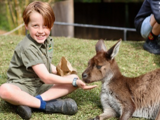 The Australian Reptile Park and Wildlife Sanctuary is regarded as one of the country's premier attractions and is the only zoo in Australia committed to saving lives with a spider and snake Venom-Milking Program in place.